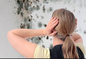 Боремся с грибком на стенах