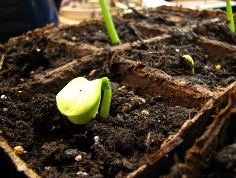 Чем готовить землю перед посадкой тыквенных культур?